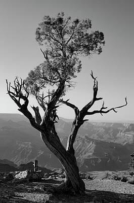 Photograph - Juniper Tree At Grand Canyon II Bw by David Gordon