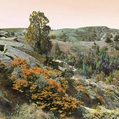 Photograph - Juniper Tree Reverie by Cris Fulton