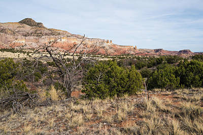 Photograph - Juniper Trees And Sandstone Mesas by Tom Cochran