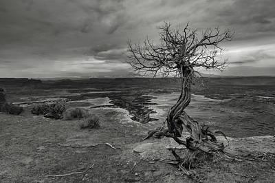 Dead Tree Photograph - Juniper's View by Joseph Smith