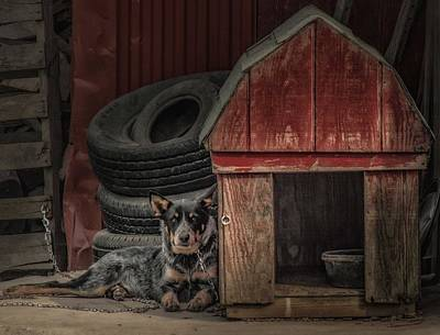 Photograph - Junkyard Dog by Melinda Martin