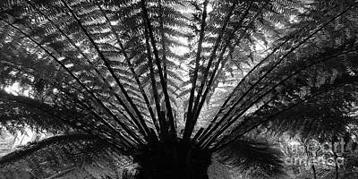 Photograph - Jurassic Fern Bw by Tim Richards