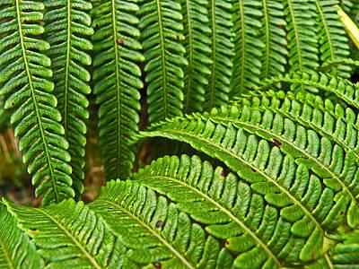 Photograph - Jurassic Ferns by Elizabeth Hoskinson