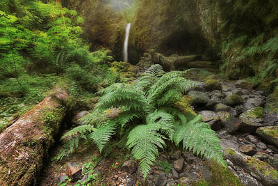 Stream Photograph - Jurassic Forest by David Gn