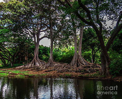 Photograph - Jurassic Park Tree Group On River by Blake Webster