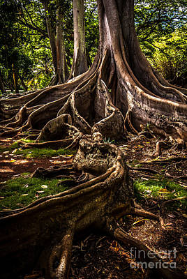 Photograph - Jurassic Park Tree Trailing Root by Blake Webster