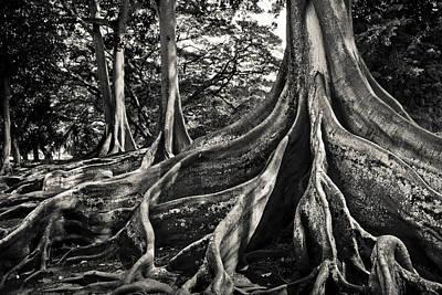 Jurassic Trees Art Print by Thorsten Scheuermann