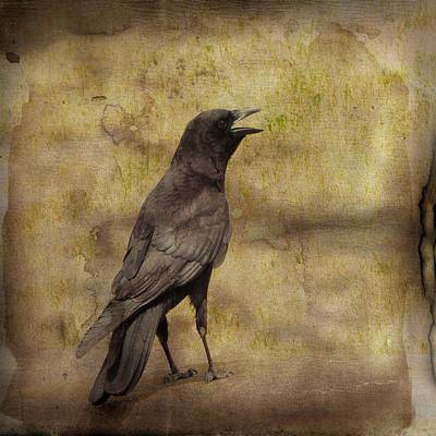 Brown Tones Photograph - Just A Crow  by Gothicrow Images
