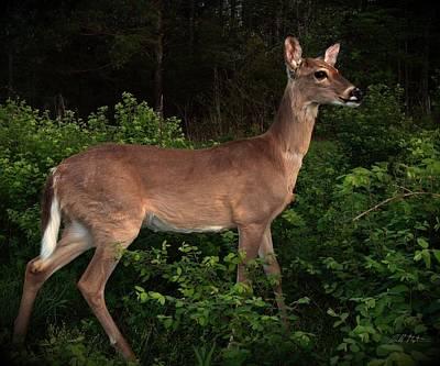 Just A Deer Art Print by Bill Stephens