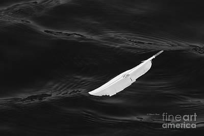 Photograph - Just A Feather by Deborah Benoit