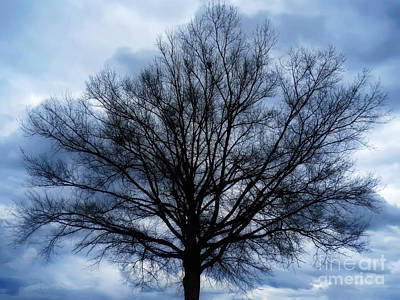 Photograph - Just A Gray Blue Day by Sue Melvin