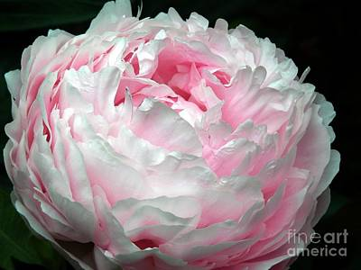 Photograph - Just A Hint Of Pink by Marcia Lee Jones
