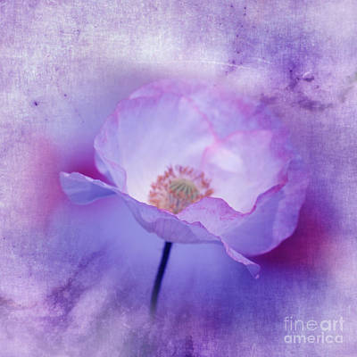 Digital Art - Just A Lilac Dream -3- by Issabild -