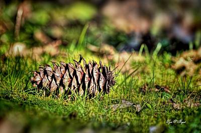 Photograph - Just A Pinecone by Tyra OBryant