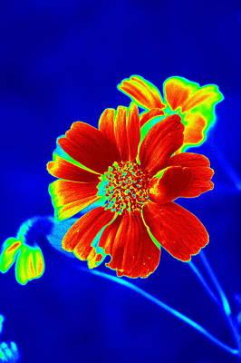 Priska Wettstein Land Shapes Series - Just a Pretty Little Desert Flower in Red by Teresa Stallings