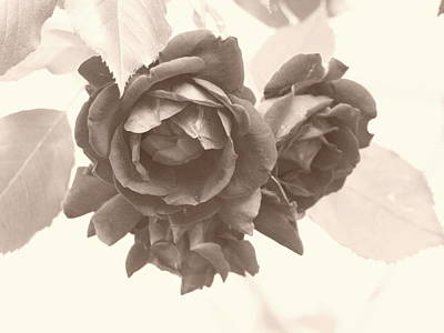Photograph - Just A Rose - Sepia by Jeffrey Peterson