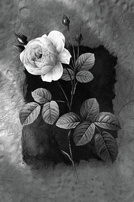 Mixed Media - Just A Rose Black And White by Georgiana Romanovna