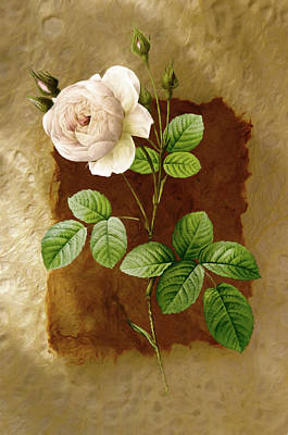 Mixed Media - Just A Rose by Georgiana Romanovna