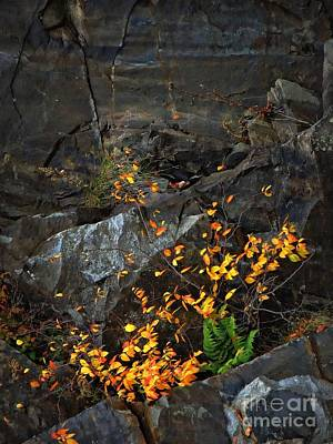 Photograph - Just A Touch Of Gold by Marcia Lee Jones