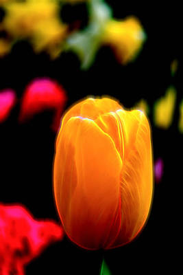 Photograph - Just A Tulip by Kevin McClish