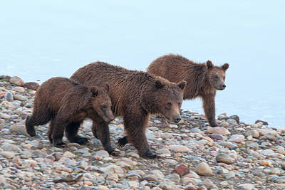 Grizzly Photograph - Just A Walk On The Beach by Steve Stuller