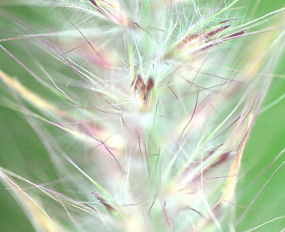 Photograph - Just A Weed In The Park by Christine Ricker Brandt