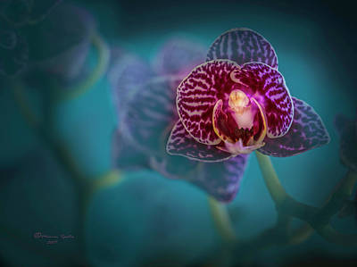 Black Orchids Photograph - Just Add Color by Marvin Spates
