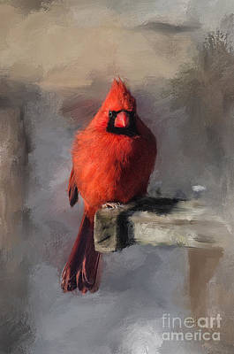 Cardinal Digital Art - Just An Ordinary Day by Lois Bryan