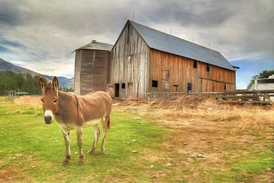 Donkey Photograph - Just Another Day On The Farm by Donna Kennedy