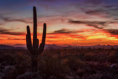 Photograph - Just Another Saguaro Sunset  by Saija Lehtonen