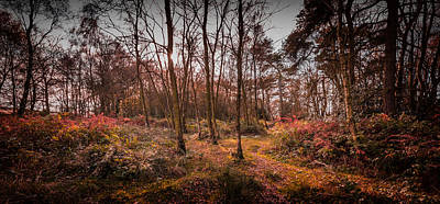 Photograph - Just Autumn by Nick Bywater