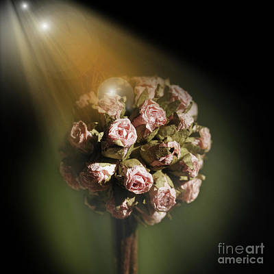 Photograph - Just Beautiful by Barbara Dudzinska