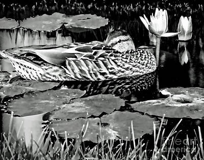 Photograph - Just Being A Duck On A Lazy Summer Day Black And White Wall Art by Carol F Austin