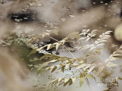 Photograph - Just Blowing In The Breeze by Marcia Lee Jones