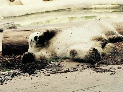 Photograph - Just Chillin by Christine Montague
