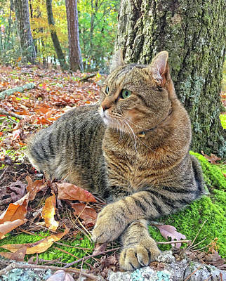 Just Chillin' In The Woods Art Print by Susan Leggett