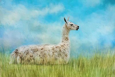 Llama Photograph - Just Chillin by Jai Johnson