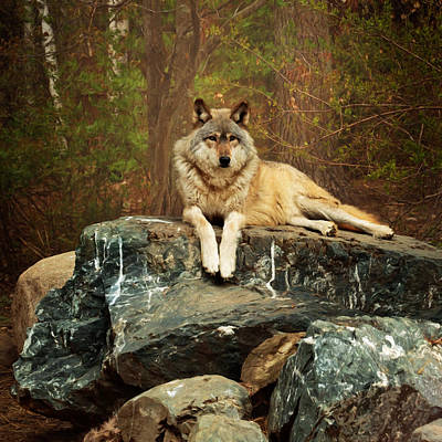 Recently Sold - Animals Royalty-Free and Rights-Managed Images - Just Chilling by Susan Rissi Tregoning