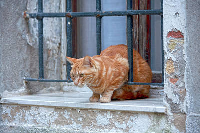 Venecia Photograph - Just Curious Cat by Heiko Koehrer-Wagner