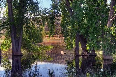 Watson Lake Photograph - Just Drifting by Thomas  Todd