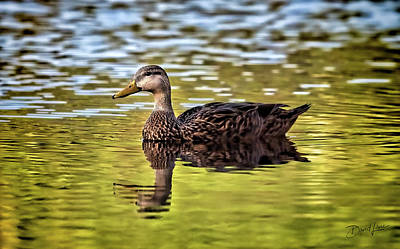Photograph - Just Ducky by David A Lane