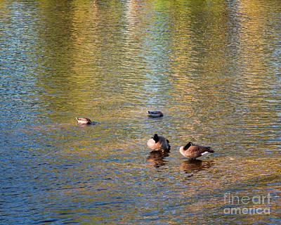 Photograph - Just Ducky by Jon Burch Photography