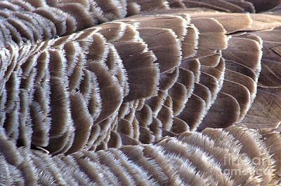 Photograph - Just Feathers by Jeremy Hayden