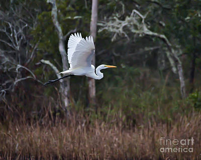 Photograph - Just Flying By by Kerri Farley
