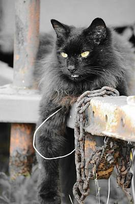 Photograph - Just Hanging Out by Lynda Dawson-Youngclaus