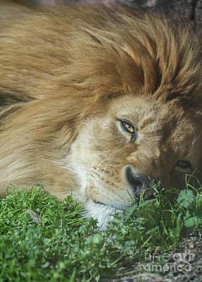 Photograph - Just Lazing Around by Karen Jorstad