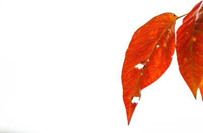 Photograph - Just Leaves by Karol Livote