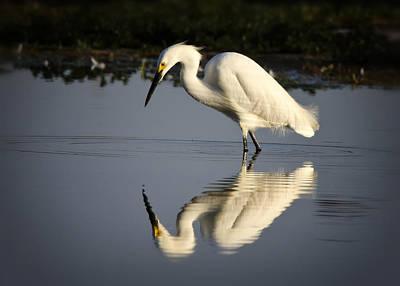 Photograph - Just Like Looking In The Mirror by Saija  Lehtonen