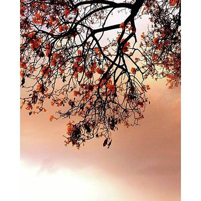 Photograph - Just Like Painting Tree by Rajesh Yadav