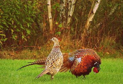 Pheasant Photograph - Just Look At Me  by Karen Cook